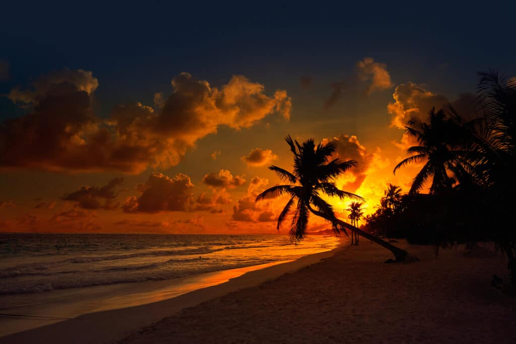 Tulum beach sunset palm tree in Riviera Maya